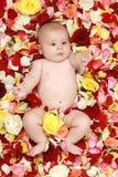 婴孩美丽的男孩工厂上升了 免版税库存图片