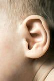 婴孩耳朵 库存图片