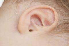 婴孩耳朵 免版税库存图片