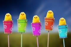 婴孩背景小鸡复活节黄色 库存图片