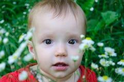 婴孩草甸 库存照片