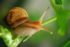 婴孩蜗牛 免版税库存照片