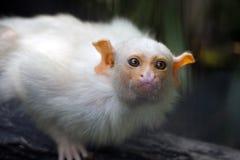 婴孩连斗帽女大衣猴子 免版税库存图片