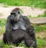 婴孩逗人喜爱的大猩猩母亲 免版税库存照片