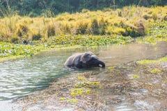 婴孩逗人喜爱的大象 库存图片