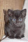 婴孩逗人喜爱的小猫 库存照片