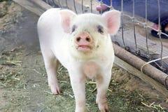 婴孩逗人喜爱的模糊的月大一个小猪二 免版税库存照片