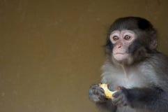 婴孩逗人喜爱的猴子 免版税库存照片