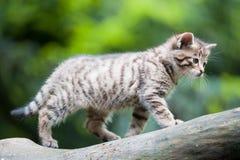 婴孩逗人喜爱的野猫 图库摄影