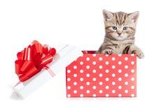 婴孩配件箱猫滑稽的礼品红色 库存图片