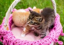婴孩镶边了在柳条筐的小猫在绿草户外 库存图片
