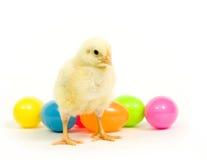 婴孩鸡复活节彩蛋 库存图片