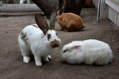婴孩babbit 免版税图库摄影