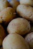 嫩土豆土豆 图库摄影