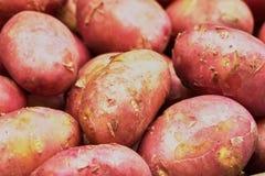 嫩土豆土豆 库存图片