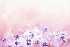 嫩在轻的减速火箭的桃红色颜色的春天花卉背景与蓝色Veronica Germander, Speedwell花 狂放的meado花束  免版税库存图片