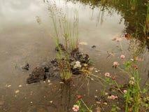 嫩年轻草在纯净的水中 免版税库存照片