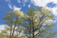 嫩春天叶子 库存图片