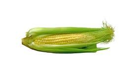 嫩玉米棒子 免版税图库摄影