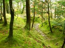 嫩绿的森林 库存照片