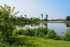 嫩绿的湖边在晴朗的夏天早晨城市 库存照片