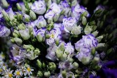 嫩蓝色和白花Macrophotography与未打开的芽的 库存图片