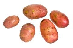嫩马铃薯 免版税库存照片