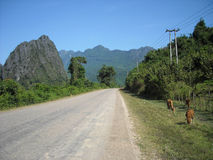 嫩绿的小山全景在东南亚 库存照片