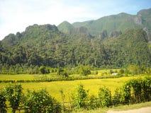 嫩绿的小山全景在东南亚 图库摄影