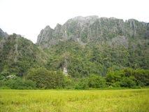 嫩绿的小山全景在东南亚 库存图片