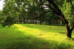 嫩绿的树和草坪 免版税库存照片