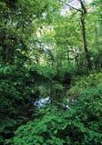 嫩绿的池塘 库存图片