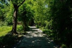 嫩绿的竹子和树沿遮荫路面在晴朗的夏天 免版税库存图片