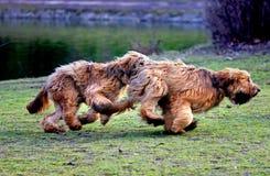 嬉戏在公园的滑稽的狗 免版税库存图片