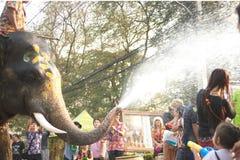嬉戏地飞溅水乐趣和幸福的大象 免版税库存图片