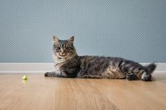 嬉戏猫休息 免版税库存照片