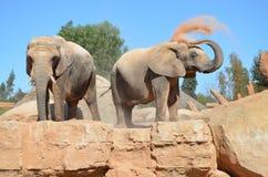 嬉戏的大象 库存图片