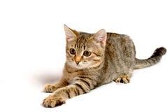 嬉戏的小猫。 免版税图库摄影