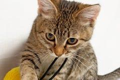 嬉戏的小猫。 免版税库存照片