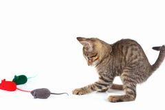嬉戏的小猫演奏与在白色背景的一只红色,灰色和绿色玩具老鼠 免版税库存图片