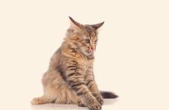 嬉戏的小猫猫 库存图片