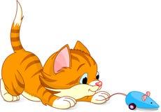 嬉戏的小猫 免版税图库摄影