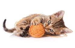 嬉戏的平纹小猫 库存图片