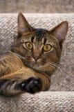嬉戏的幼小猫 图库摄影