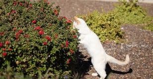 嬉戏的火焰点小猫在庭院里! 库存照片