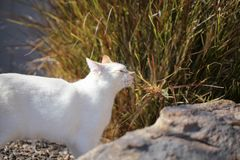 嬉戏的火焰点小猫在庭院里! 库存图片
