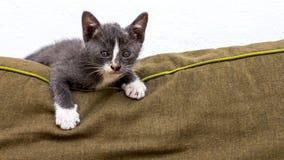 嬉戏的灰色小猫 免版税库存图片