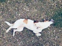 嬉戏的狗 免版税库存照片