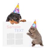 嬉戏的猫和rottweiler小狗在偷看从b的生日帽子 免版税库存图片