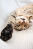 嬉戏的猫 库存照片